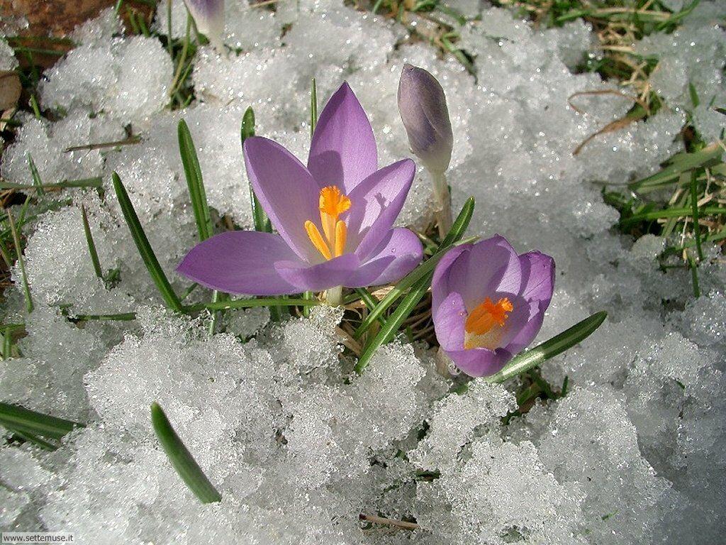 apettando primavera 1